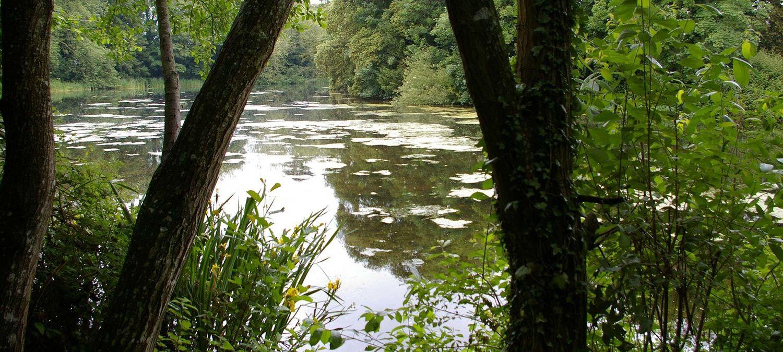 Photo of coarse lake