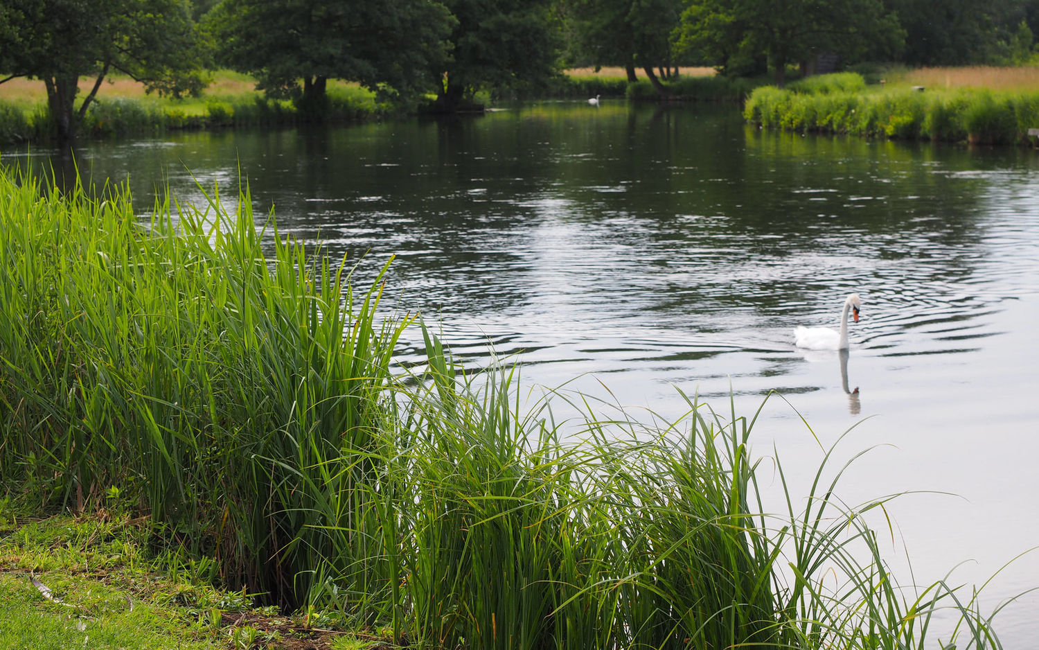 Chalkstream Trout Fishing River