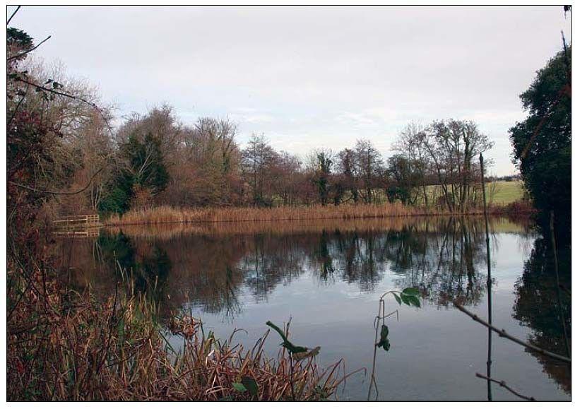 decoy-pond